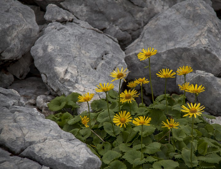 yellow petaled flower beside rocks photo