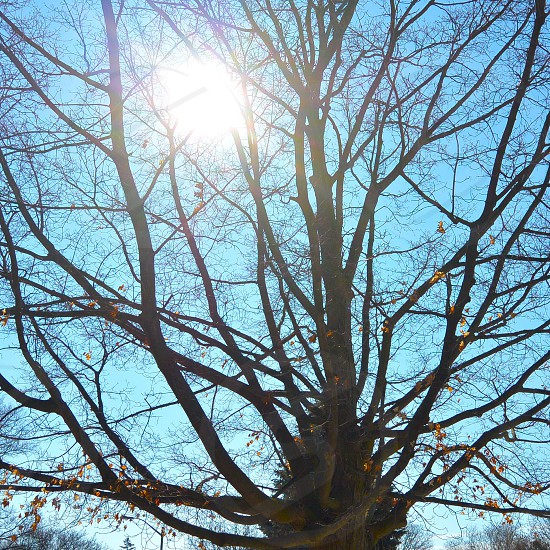brown tree branches photo