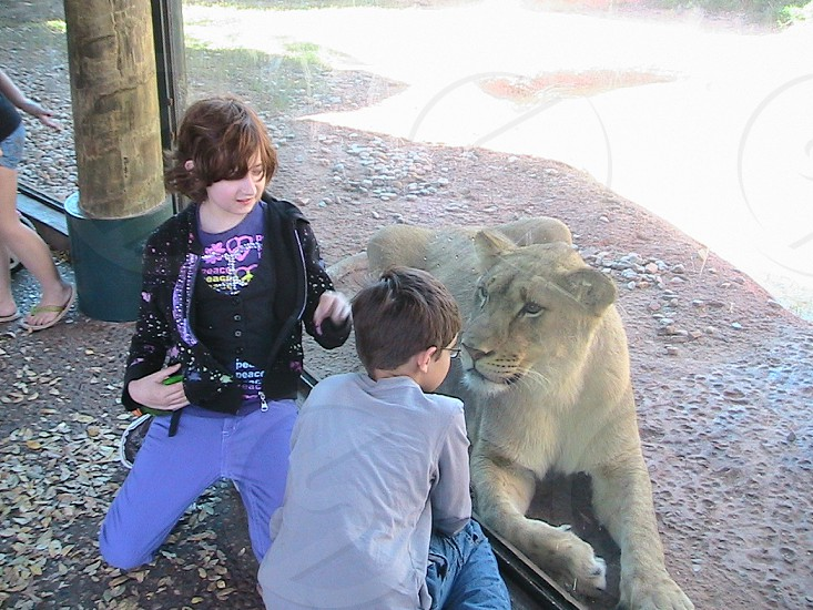 kids and lioness at the Oklahoma City Zoo photo