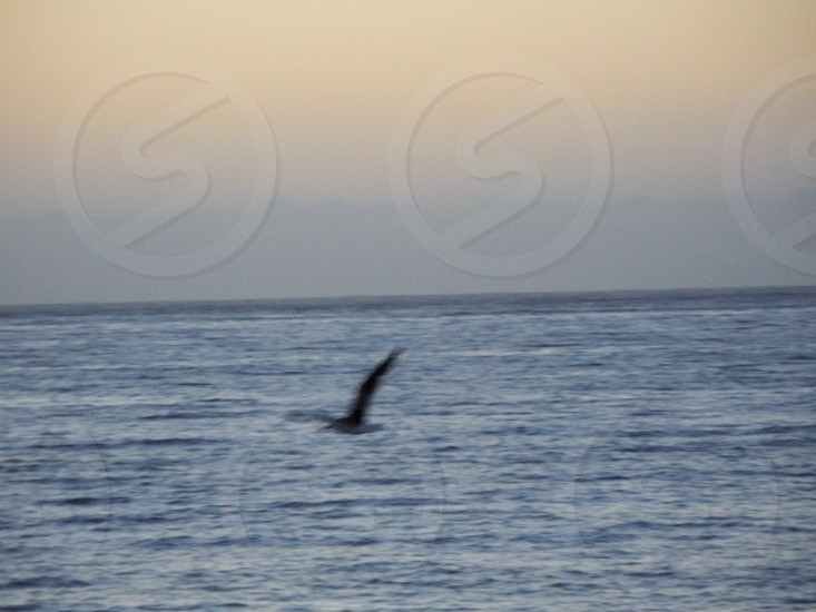 Bird in the sea photo