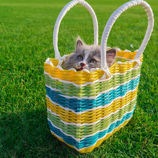 gray cat in a yellow green and blue basket photo