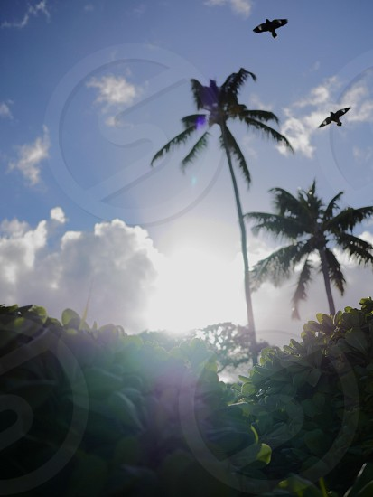 silhouette of coconut trees photo