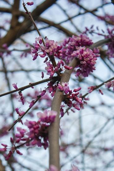 Pink purple flower Spring nature photo