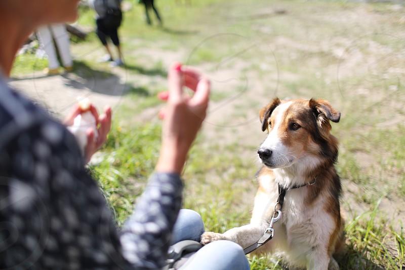 dog lifestyle  photo