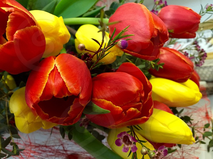 red and yellow flowers in closeup photo photo