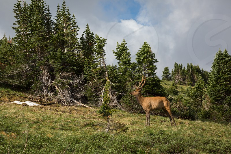 Impressions around the rocky mountain nationalpark along the trail ridge road photo