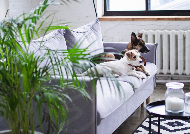 At home dogs domestic animals home interior grey minimalistic minimal plant clear photo