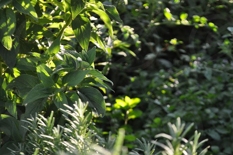 Green garden plants  photo