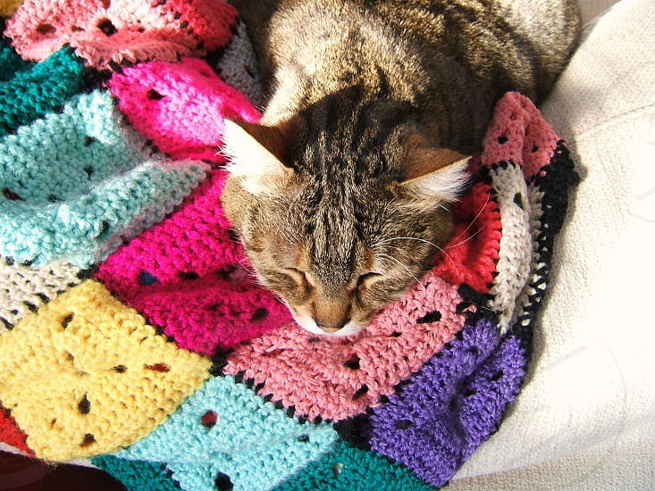 cat having a nap on crocheted multicoloured blanket photo