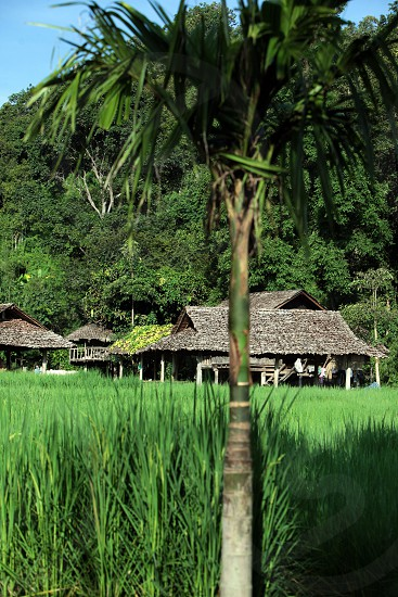 a farming village of the minority of Lahu or Lisu near the village of Chiang Dao in the north of chiang mai in the north of Thailand in Southeastasia. 