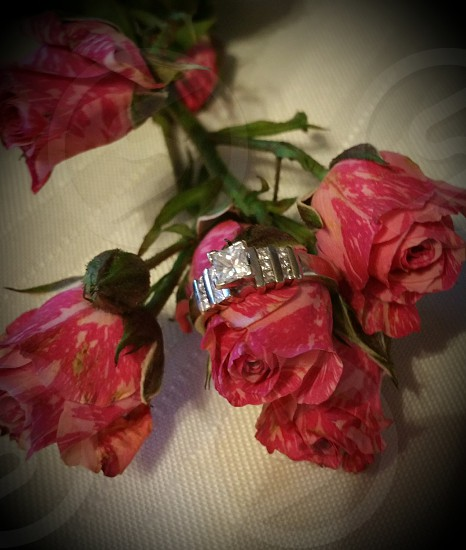 besutiful mini roses with and engage the ring  #pink #roses #engament #engame rings  # love # beautiful #soulmate # perfect photo