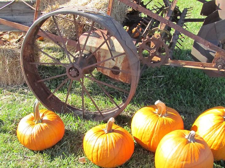 Pumpkin decorations placed around vintage rusty farm machinery / metal wheel. Fall decor photo
