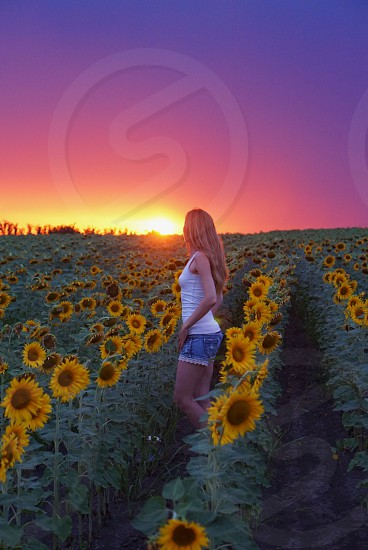 Travel inspiration inspiration travel trip vacation summer summer vacation landscape woman scenic sunset sunset sun field sunflowers sunflower sunflower field amazing beautiful nature Europe Russia Krasnodar  photo