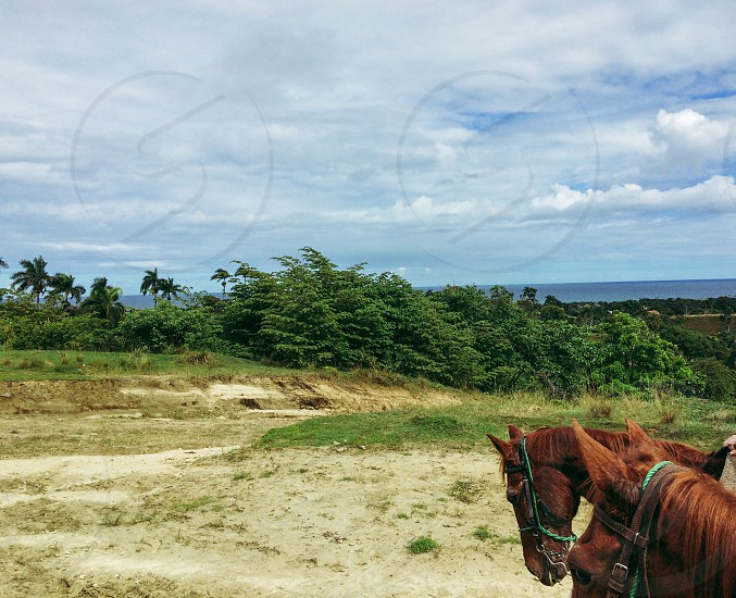 brown horses on green and brown field under blue and white cloudy sky photo