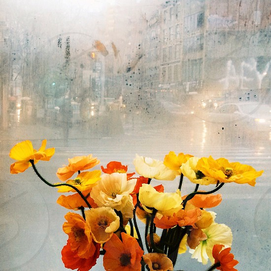 Flowers orange rain foggy photo