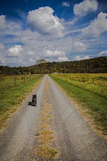 country dirt road with blue skies and dog photo