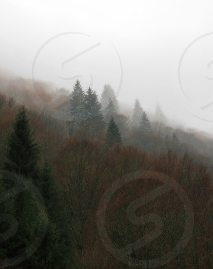 Winter signs - Cindrel mountains Steaza river Sibiu county Romania 800m 22-11-2014 photo