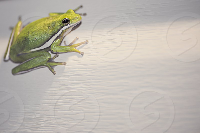 SC Tree Frog photo