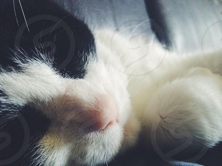 white and black cat photo