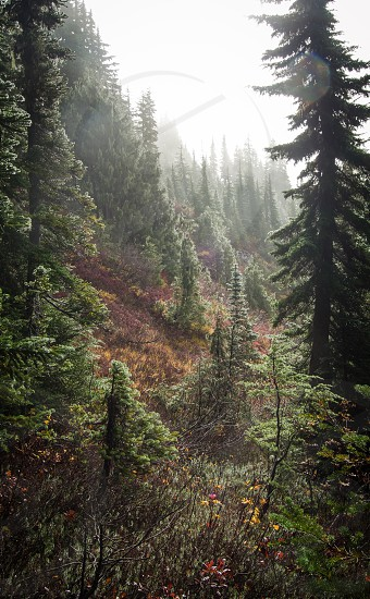 forest magical hiking travel exploring tree trees flowers fall light fog backcountry nature photo