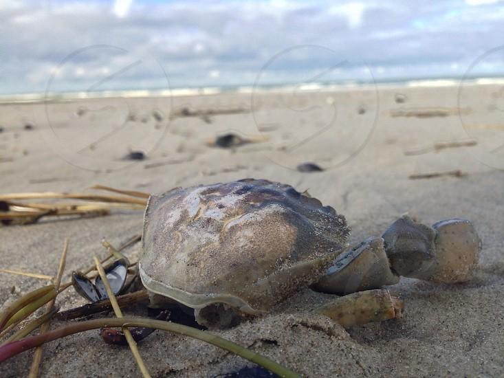 Life at the beach #Vlieland photo