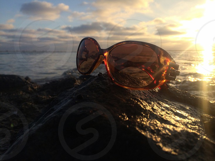 tortoise sunglasses on rock near ocean photo