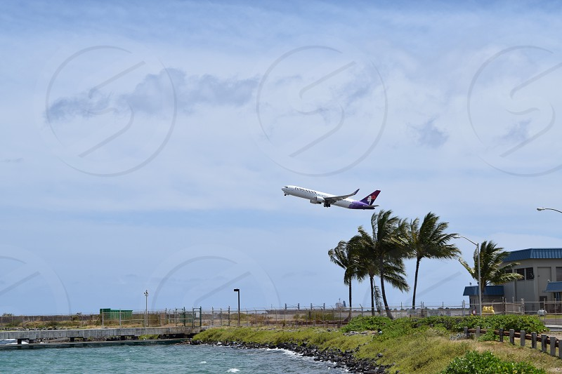 white red and blue airplane flying over palm trees photo