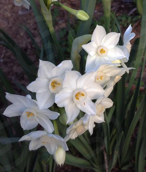 Whiteflowergardenspring photo