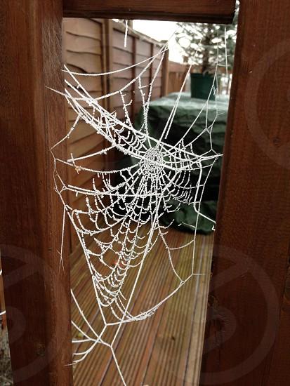 Frozen spider web photo