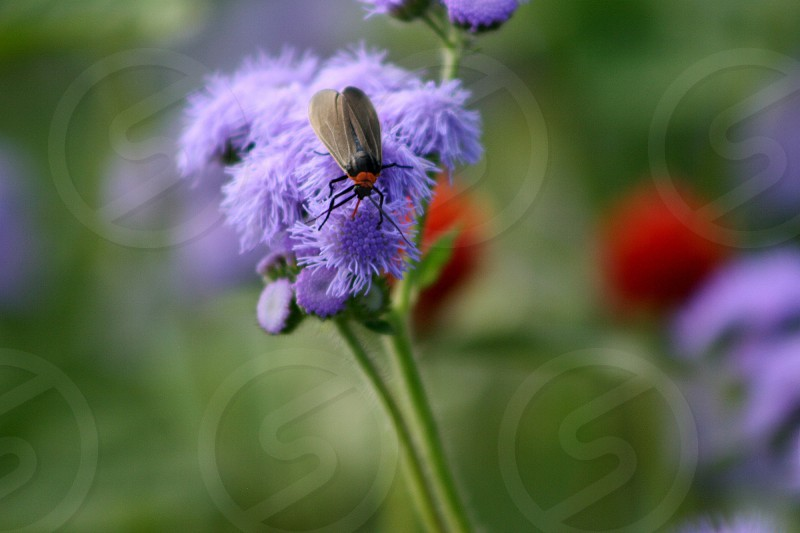 selective photography of black and red beetle perch on purple flower during daytime photo