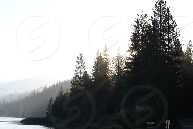silhouette of pine trees beside water body photo