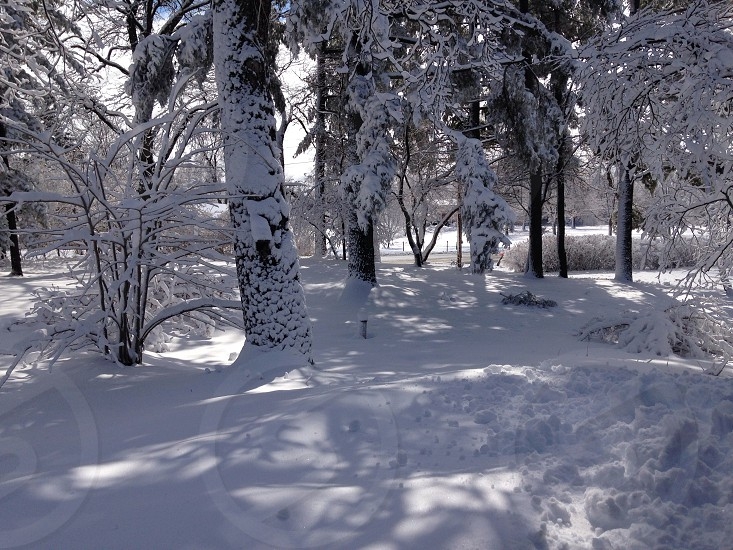 winter view photo