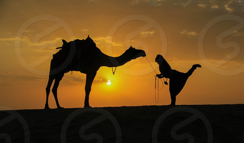 CAMEL AND WOMEN IN INDIA.. 2014 photo