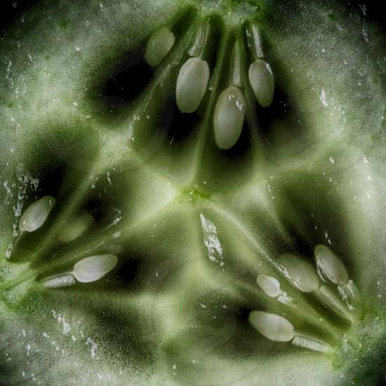 Macro close up of cucumber  photo