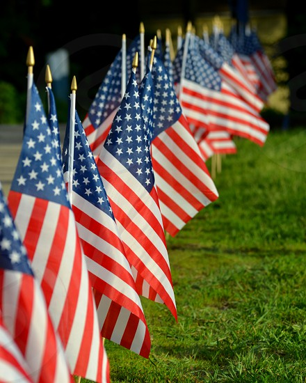 row of american flags in grass photo