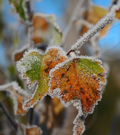 Crisp winter flora photo