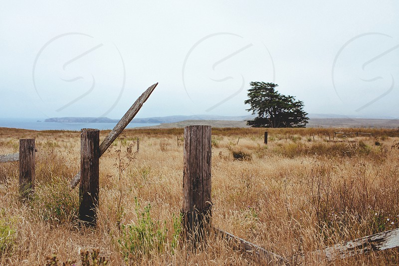 brown grass field beyond the fence photo