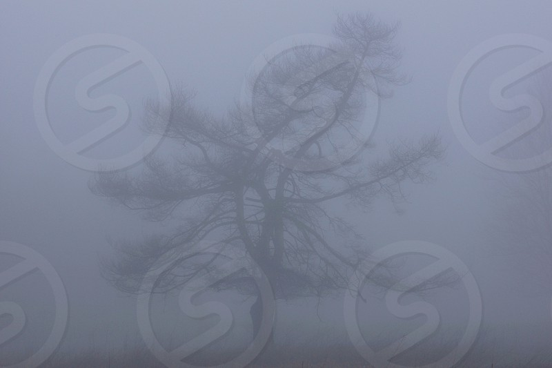 Tree in early morning. photo