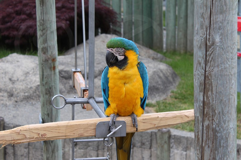 gold & blue macaw macaw zoo photo