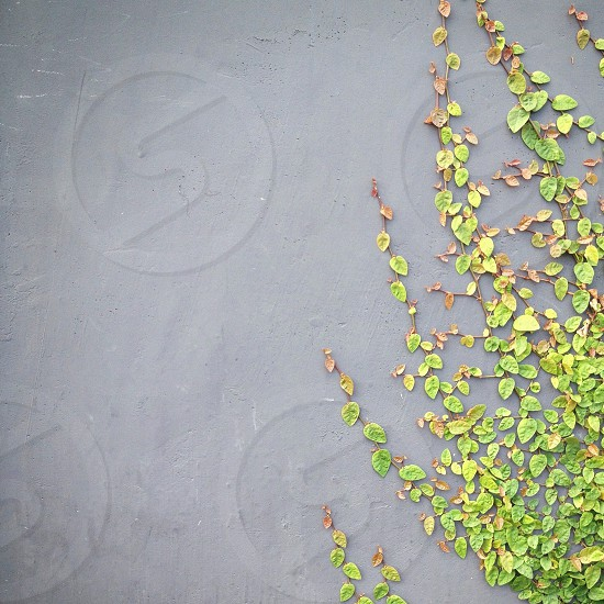 green leaves on gray surface photo