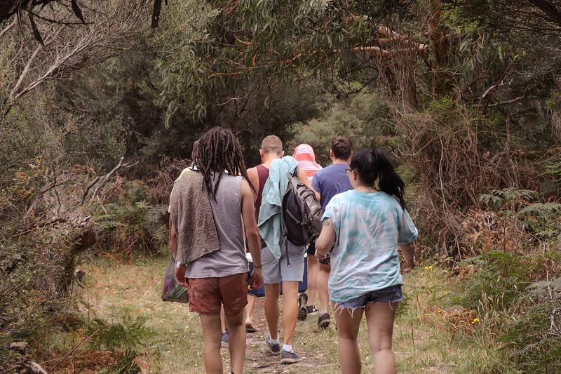 Group of friends walking through forest photo