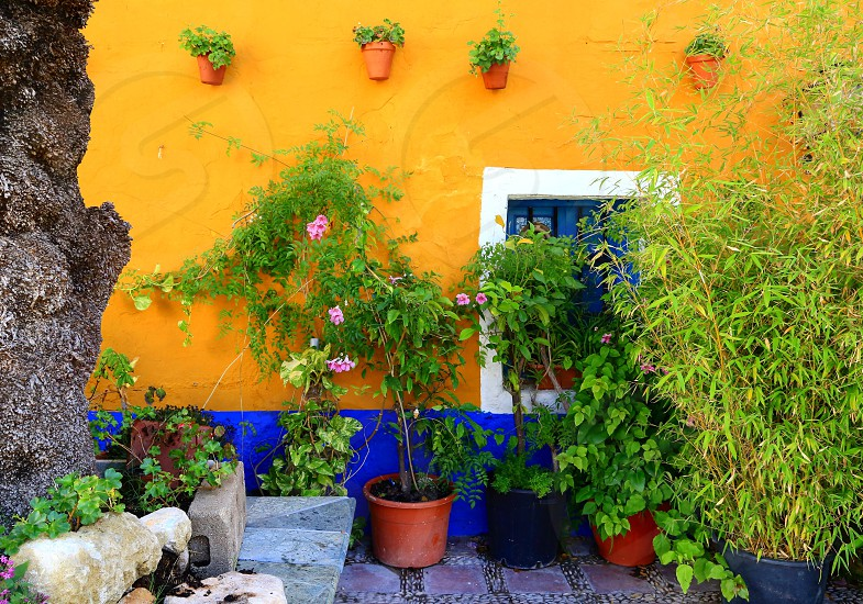 Spain exterior colorful botany flora streetview photo