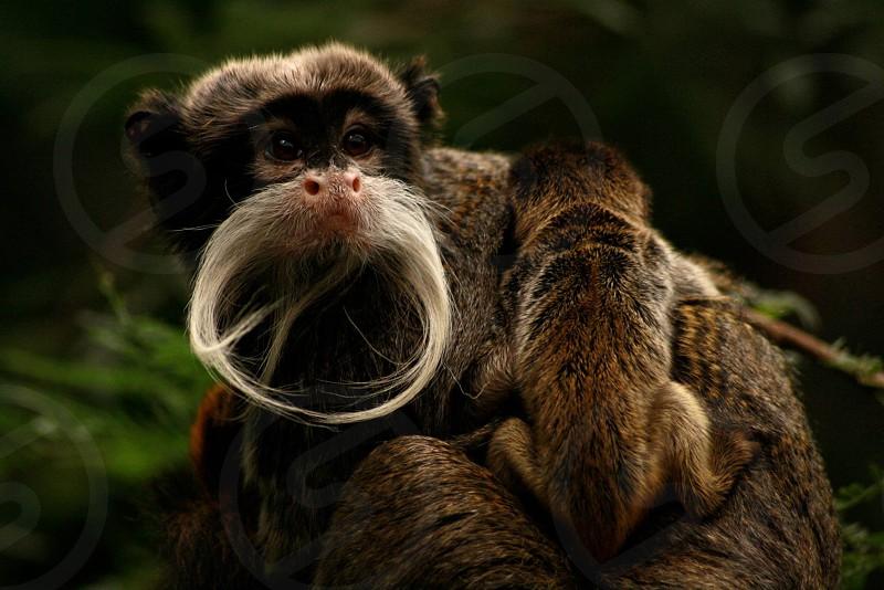 Monkey with baby baby monkey baby animal monkey photo