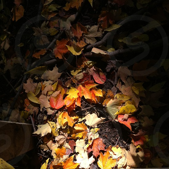 orange and brown leaves on ground  photo