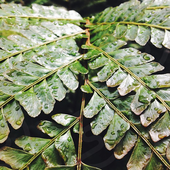 leaf with water droplets photo