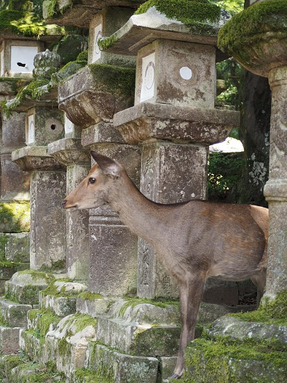 奈良 奈良公園 鹿 photo