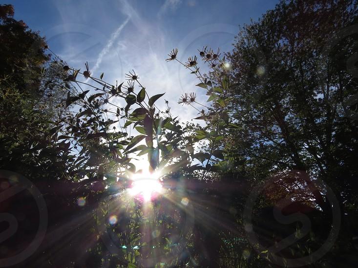 Sun through plants plants garden sun photo