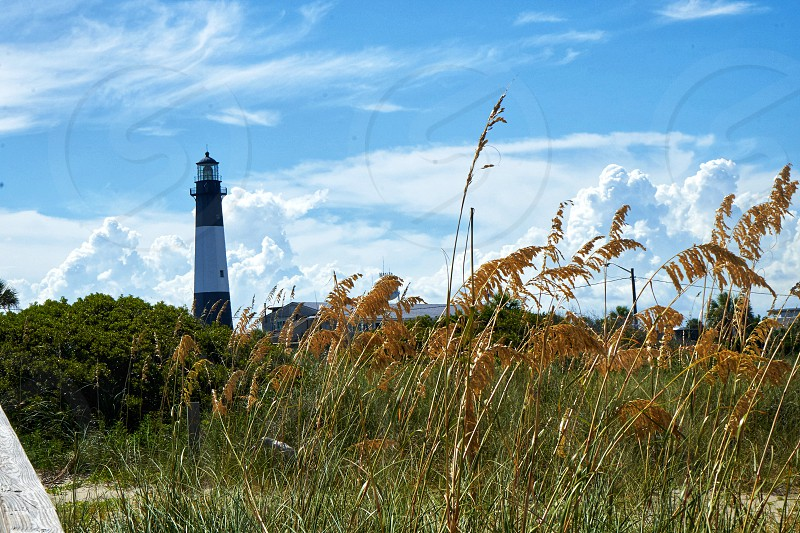 Tybee Island Lighthouse photo