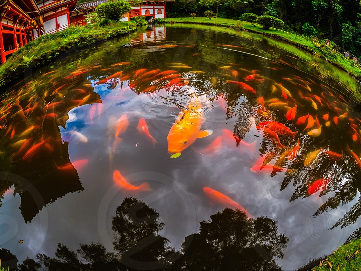 Koi ponds  photo