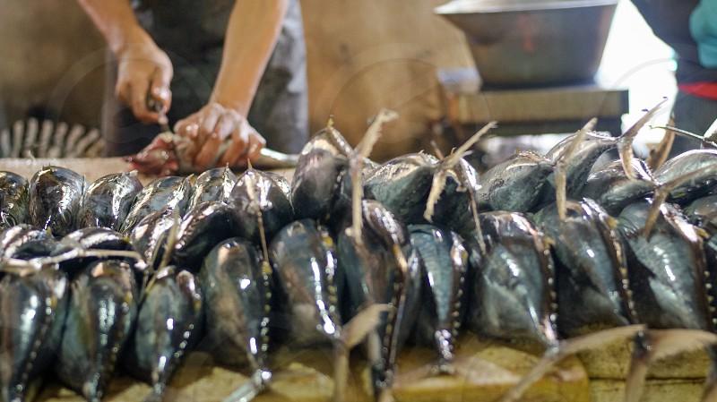 Fish market photo